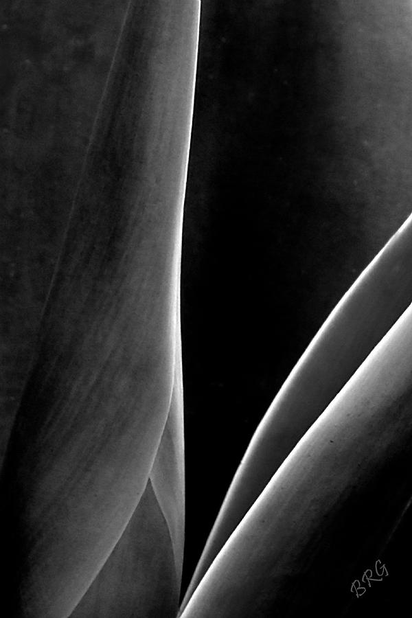 Abstract Photograph - Agave by Ben and Raisa Gertsberg