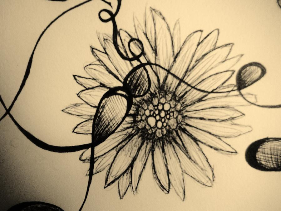Aged Daisy Drawing