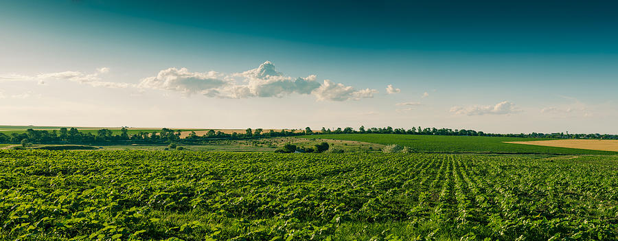 Agriculture Field And Perfect Sky Photograph