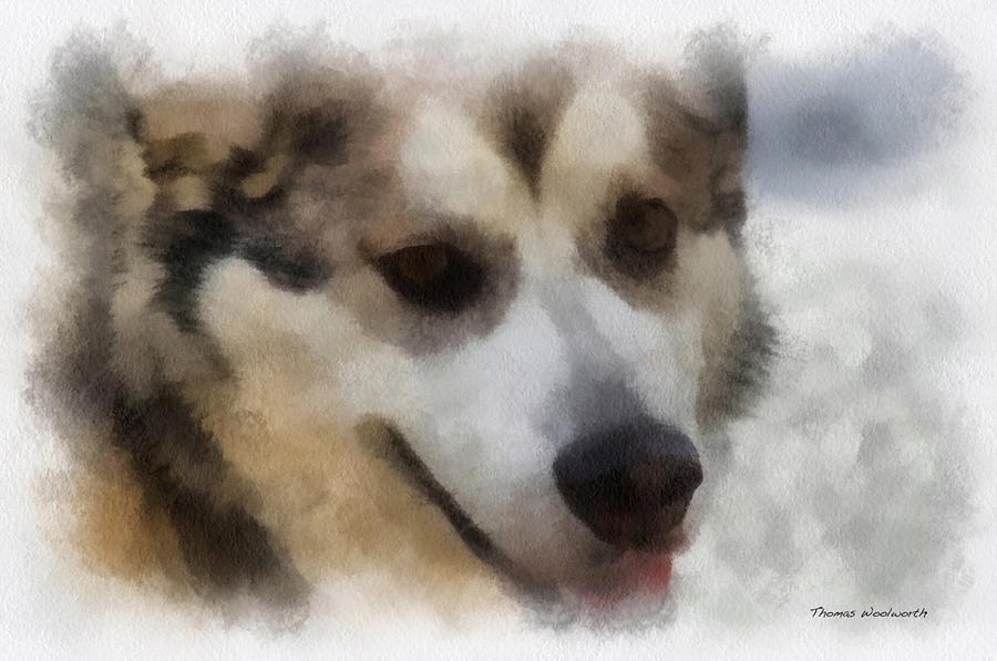 Alaskan Malamute Photo Art 08 Photograph