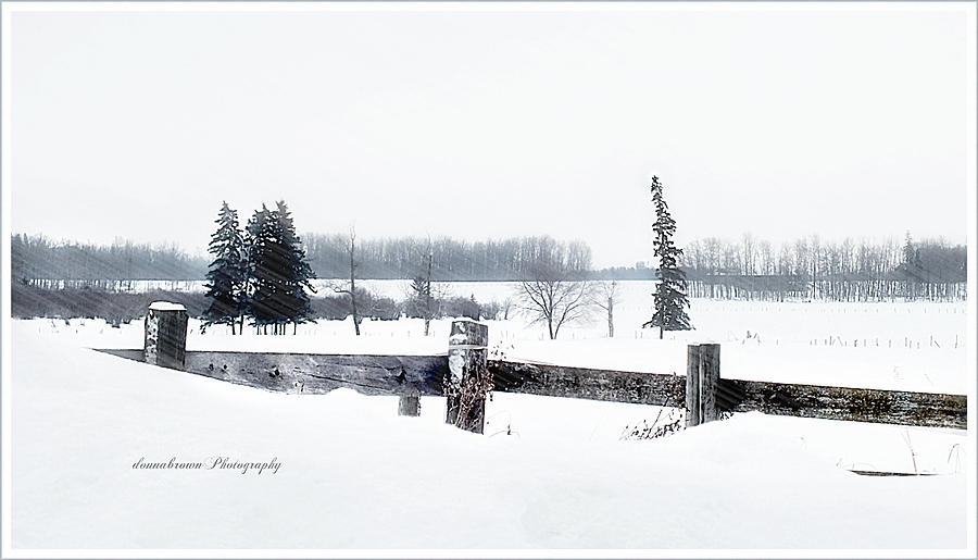 Magical Beautiful Winter Landscape Coldness Windy Snow Blizzards Sparkling Cozy Fireplace Wood Chopping Nature Wilderness Wonderland Wild Animals Barns Cats Dogs Birds Coyotes Wolves Jan 2014 Edmonton Alberta Canada  Photograph - Alberta Winter Wonderland by Donna Brown
