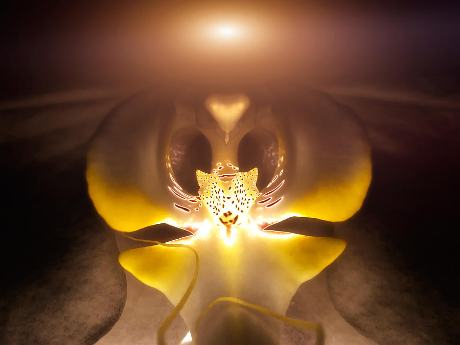 Alien Orchid Photograph