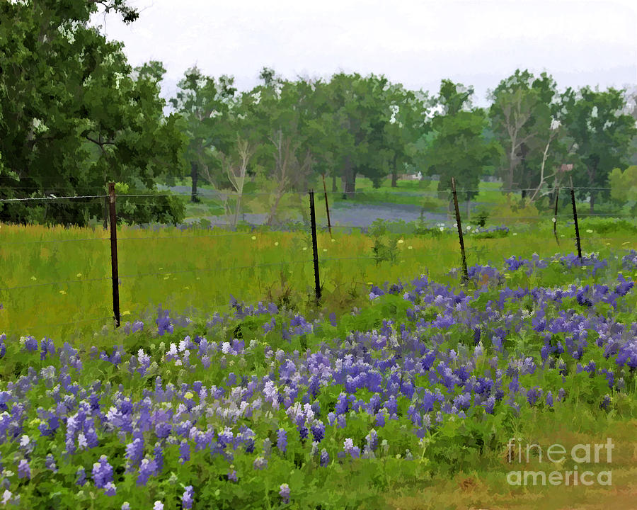 All About Bluebonnets Photograph
