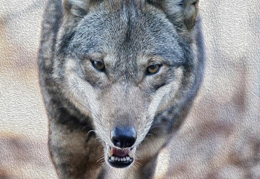 All Wolf Photograph  - All Wolf Fine Art Print