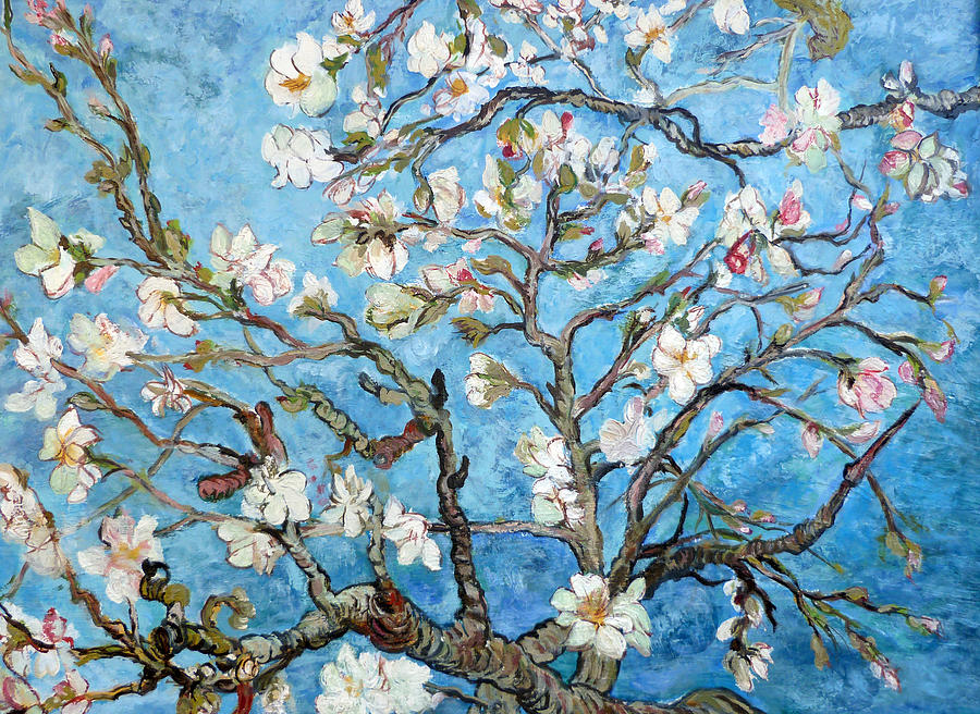 almond blossoms painting by tom roderick