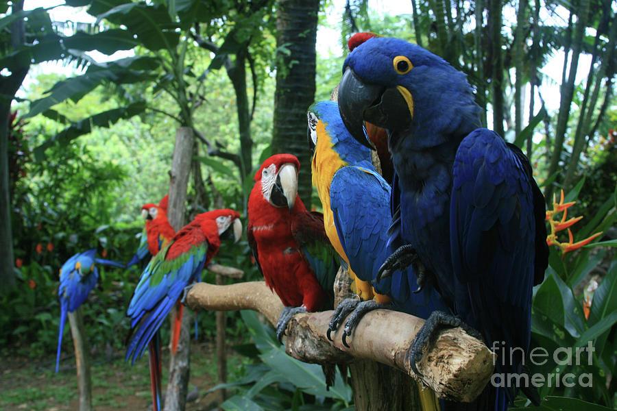 Macaw Photograph - Aloha Kaua Aloha Mai No Aloha Aku Beautiful Macaw by Sharon Mau