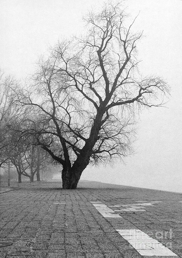 Early Morning Walk In Winter Essay