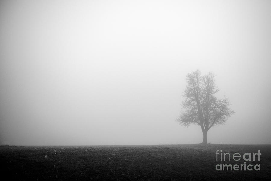 Alone In The Fog - Bw Photograph
