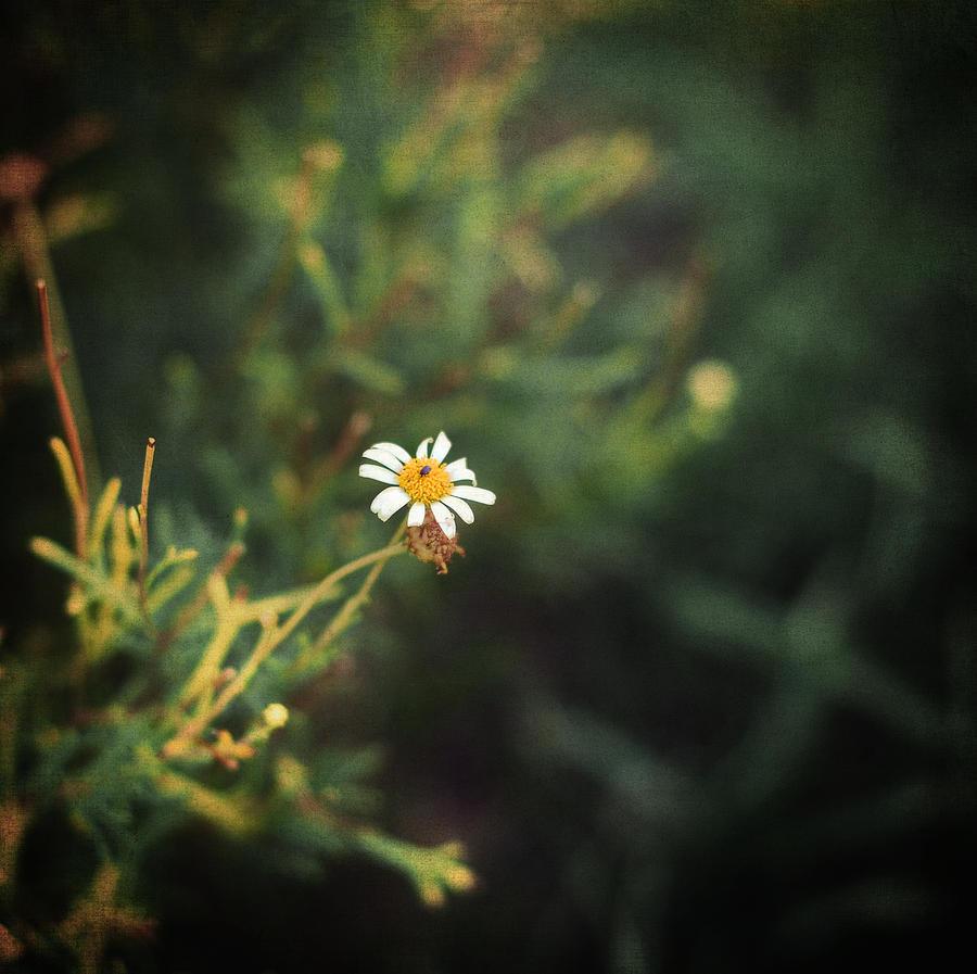 Alone Photograph