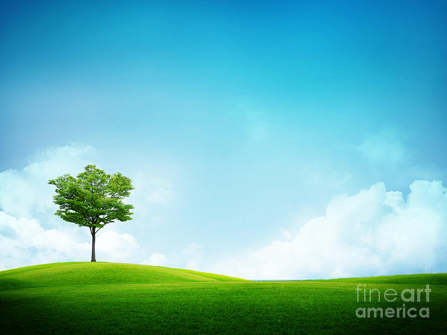 Alone Tree Photograph  - Alone Tree Fine Art Print