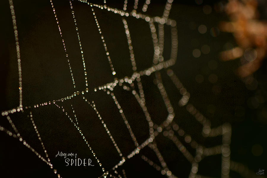 Along Came A Spider Photograph
