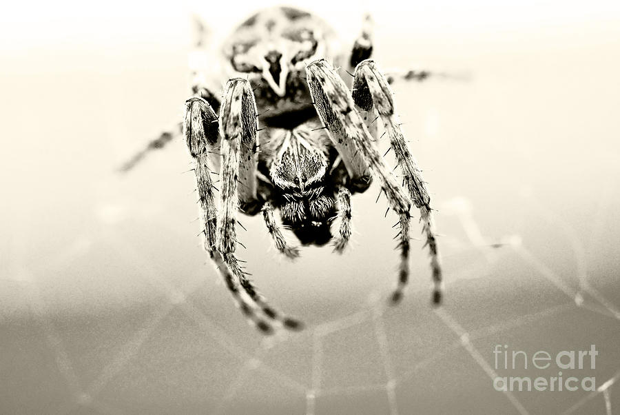 Along Comes A Spider Photograph  - Along Comes A Spider Fine Art Print