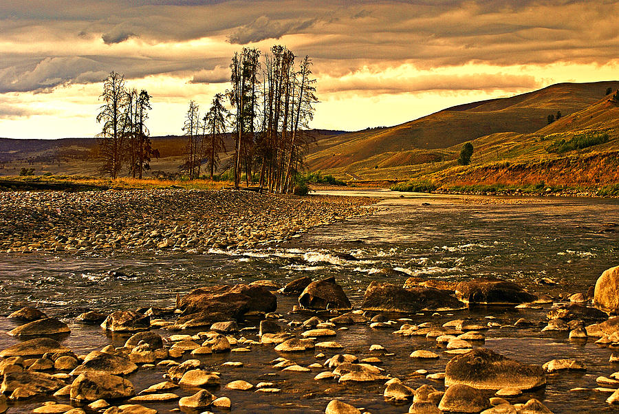 Yellowstone Photograph - Along The Larmar River by Marty Koch