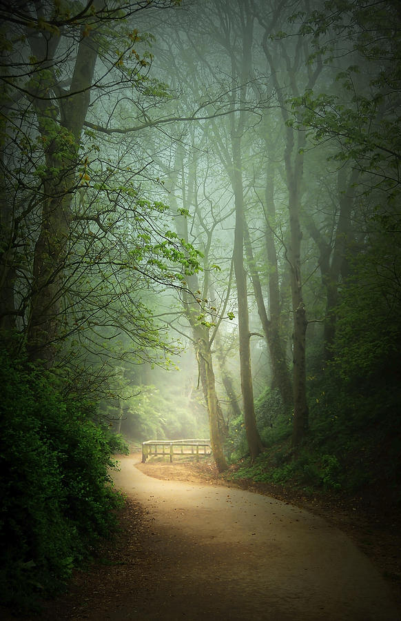 Along The Path Photograph by Svetlana Sewell