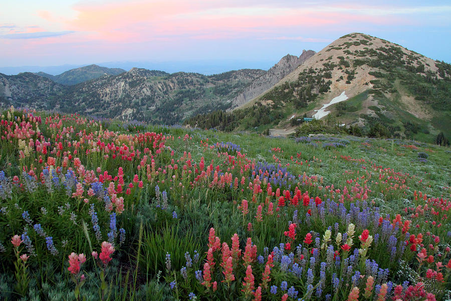 Alpine Wildflowers And View At Sunset Photograph  - Alpine Wildflowers And View At Sunset Fine Art Print