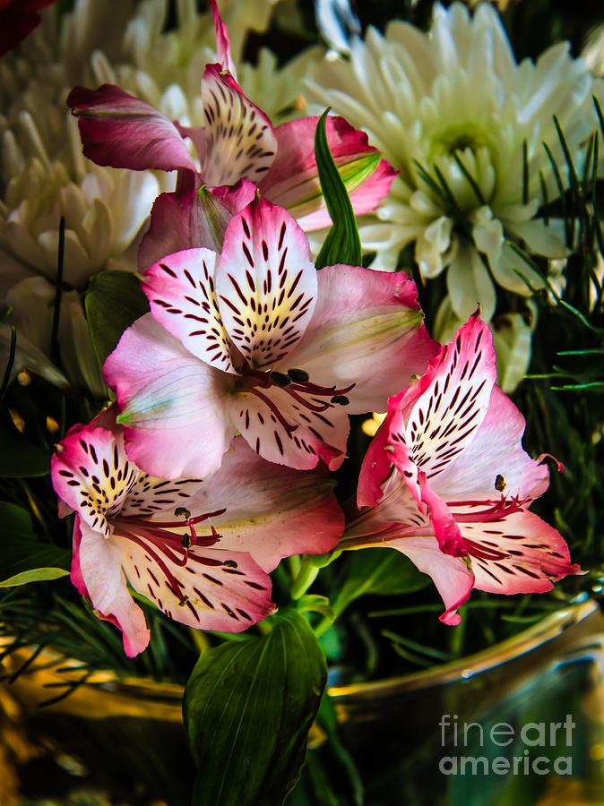 Alstroemeria Photograph