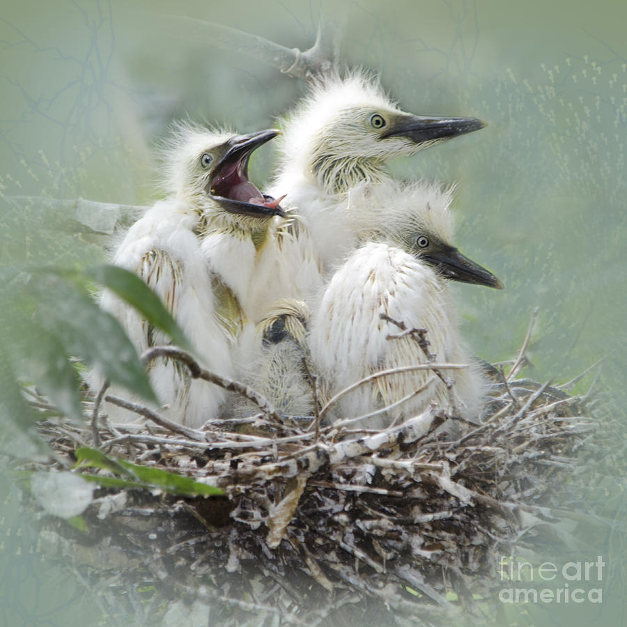 Cattle Egret Photograph - Always One In A Crowd by Betty LaRue