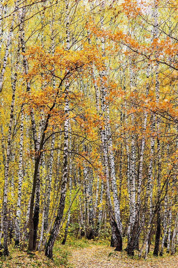 Amber Season - Featured 3 Photograph