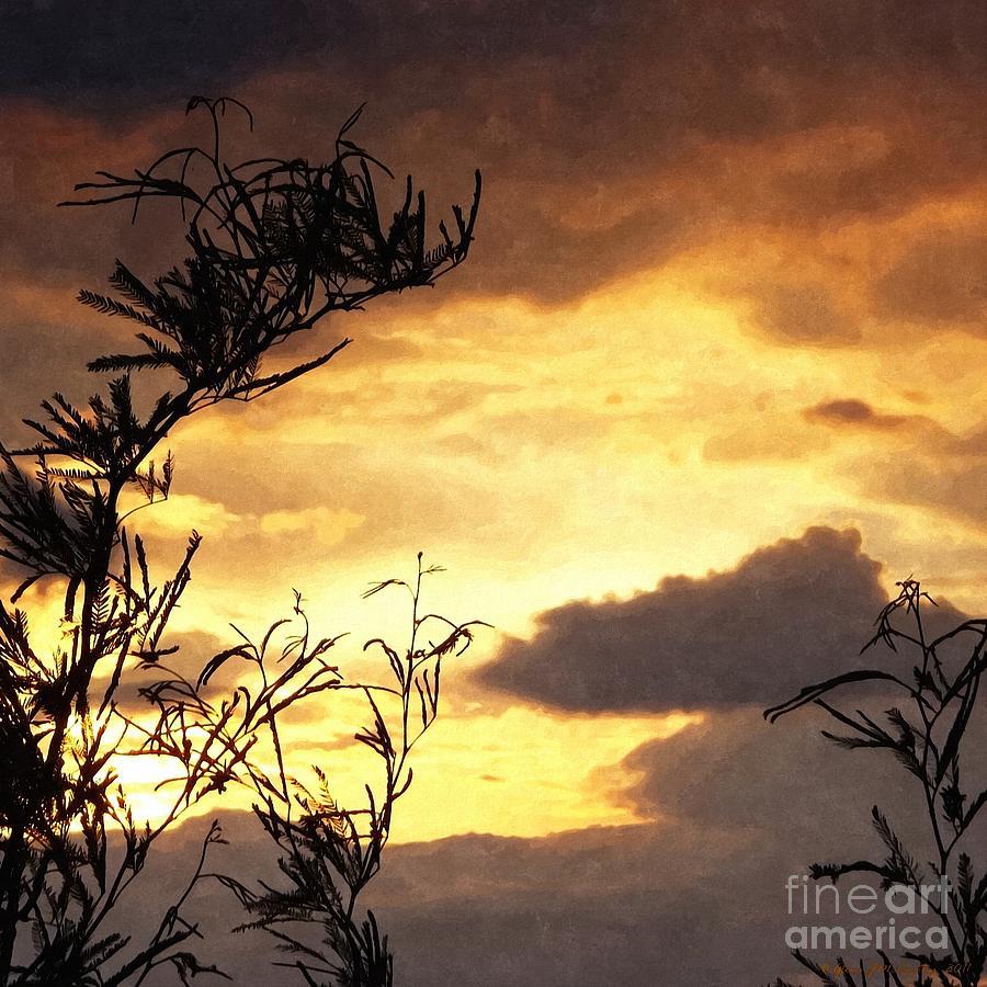 Amber Sky Photograph