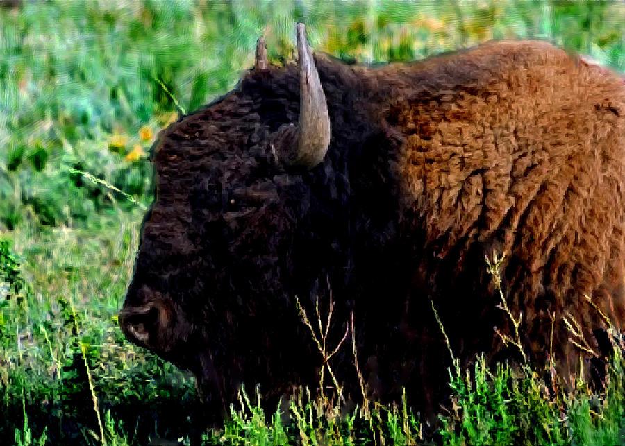 American Buffalo Yellowstone Painting Painting