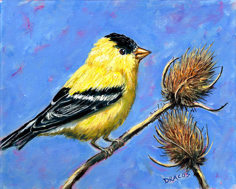 American Goldfinch With Teasels Painting by Dottie Dracos