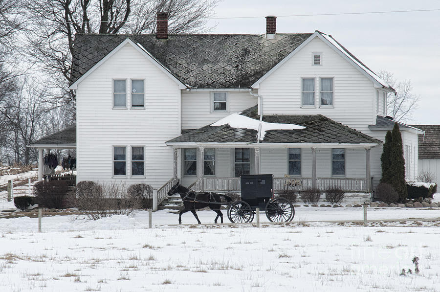 Amish Buggy And Amish House Photograph By David Arment
