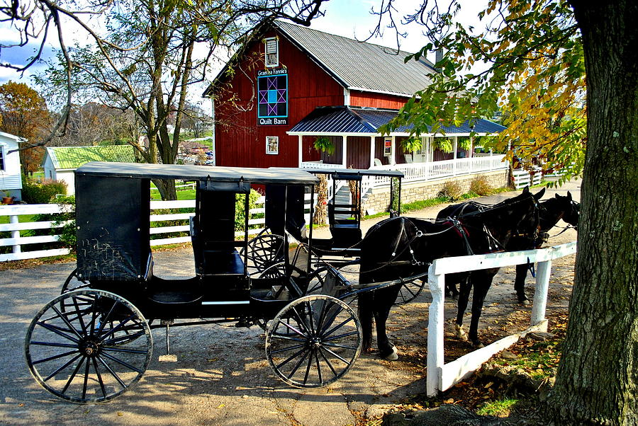 Amish Buggy Photograph  - Amish Buggy Fine Art Print