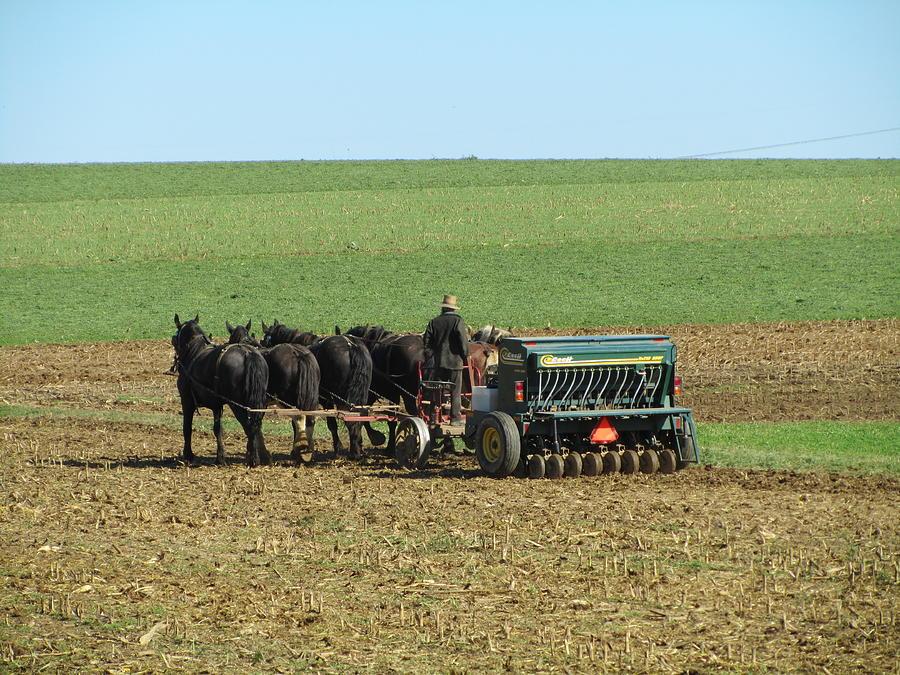 Field Photograph - Amish Farmer In Field by Sara Knob