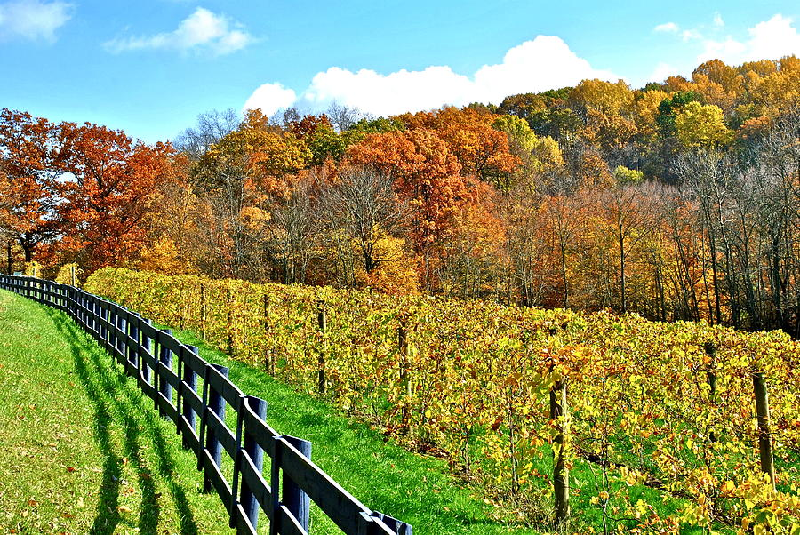 Amish Vinyard Two Photograph  - Amish Vinyard Two Fine Art Print