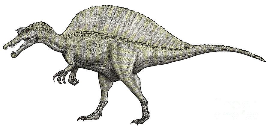 An Albino Spinosaurus by Vitor Silva