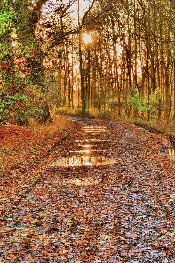 An Autumn Track Photograph