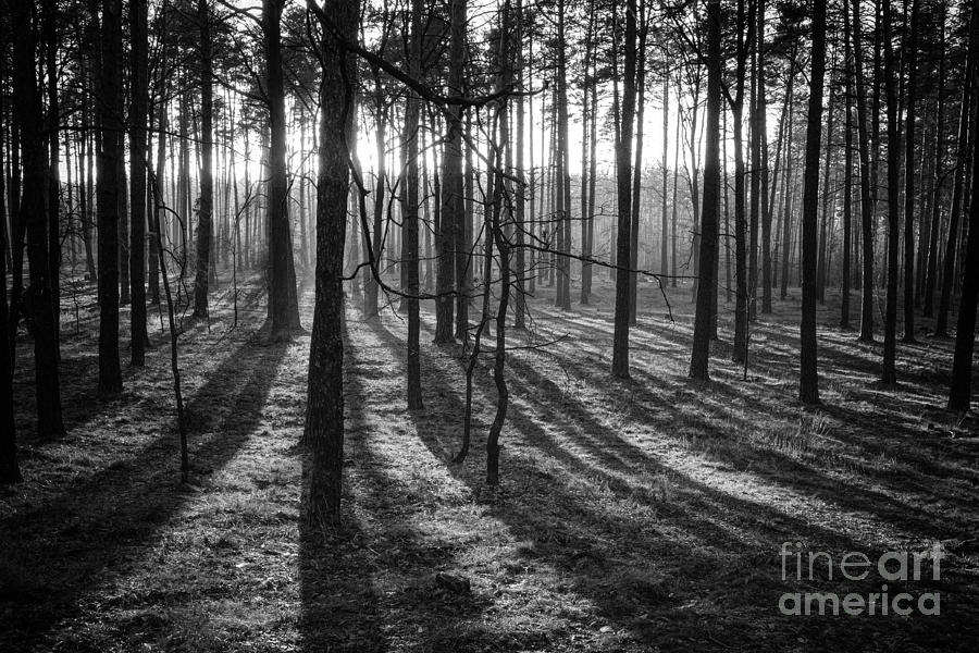 An Evening In The Forest Photograph