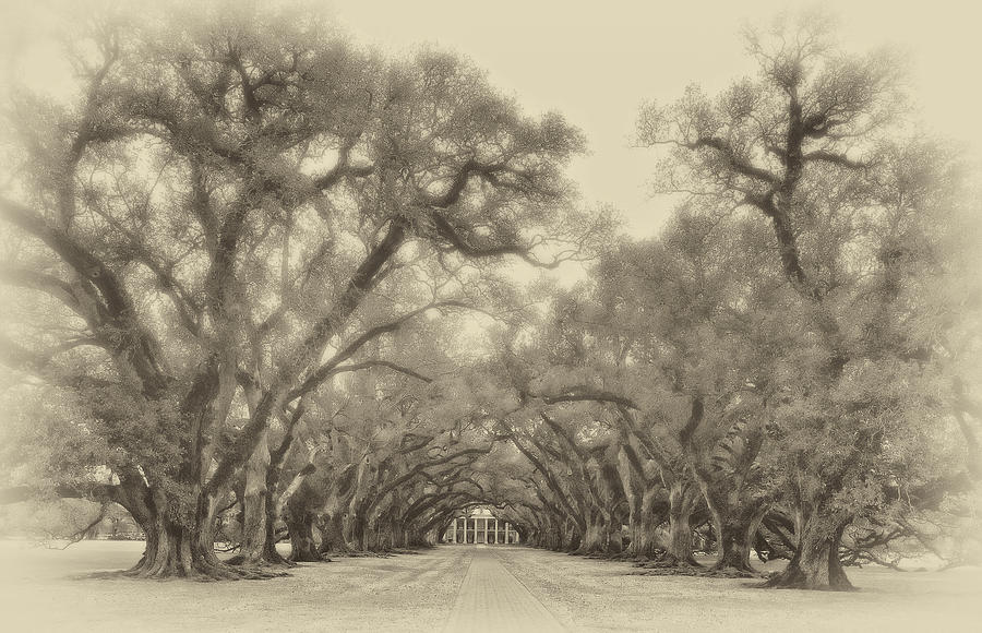 Oak Alley Plantation Photograph - And Time Stood Still Sepia by Steve Harrington