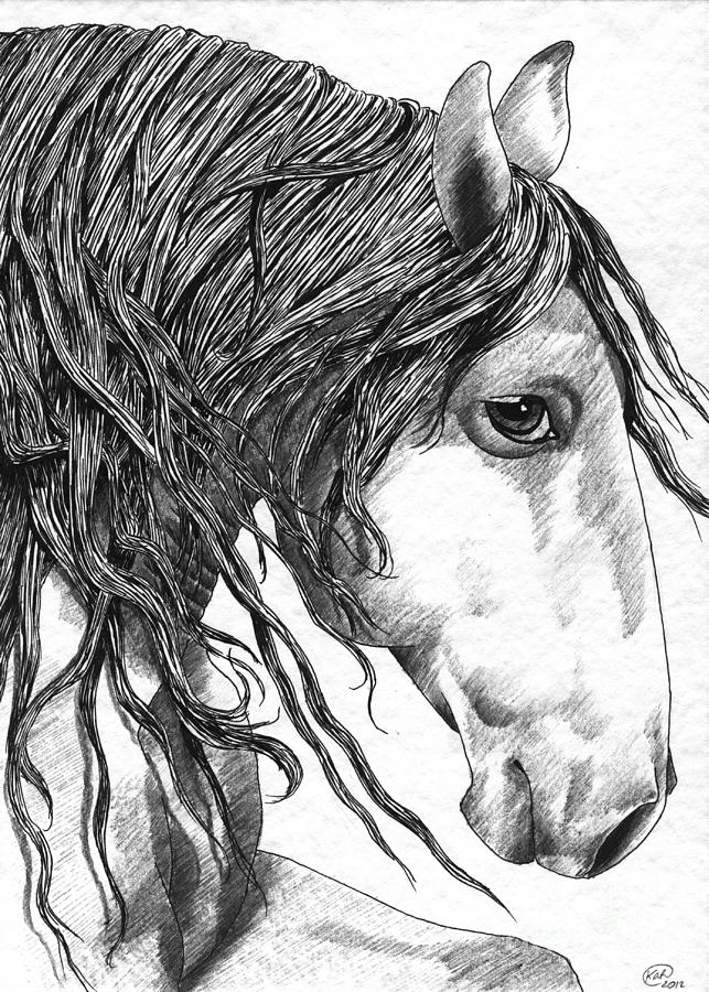 Horse Drawing - Andalusian Horse by Kate Black