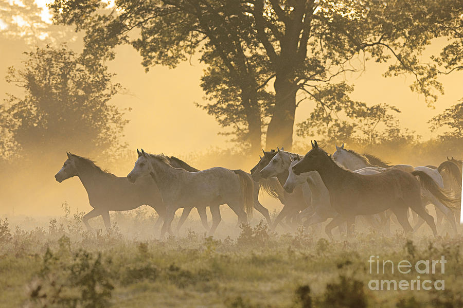 andalusian horses photograph by gabriele boiselle. Black Bedroom Furniture Sets. Home Design Ideas