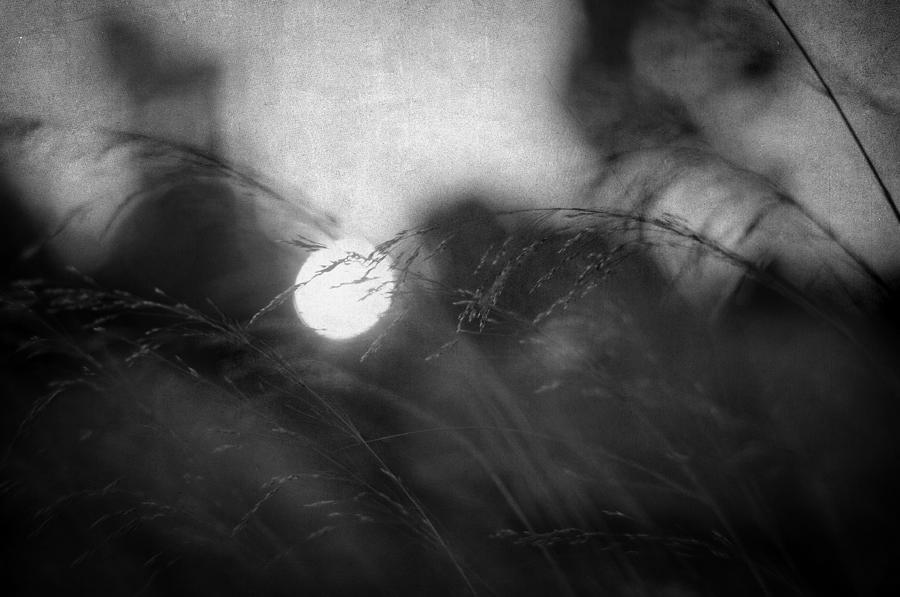 Nature Photograph - Anesthesia by Taylan Apukovska