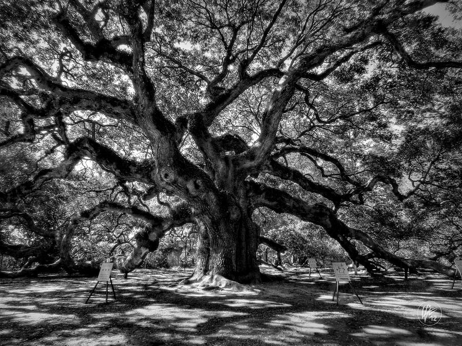 Angel Oak 002 Photograph  - Angel Oak 002 Fine Art Print