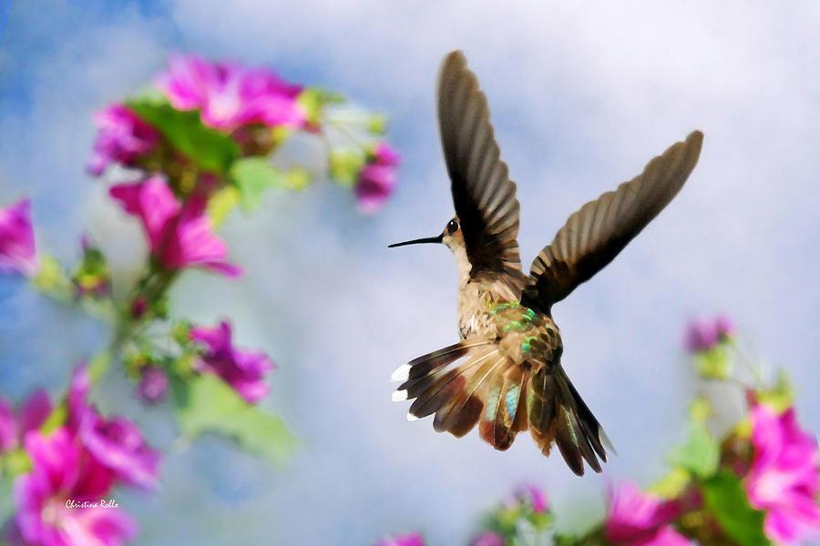 Angel Wings  Digital Art