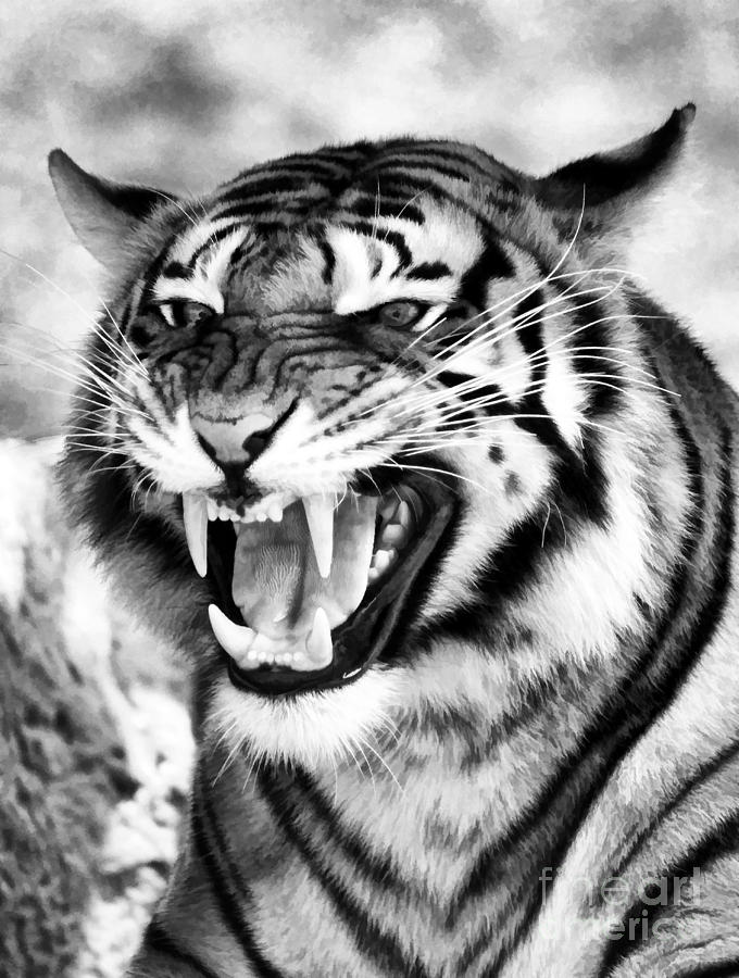 Black And White Tiger ...
