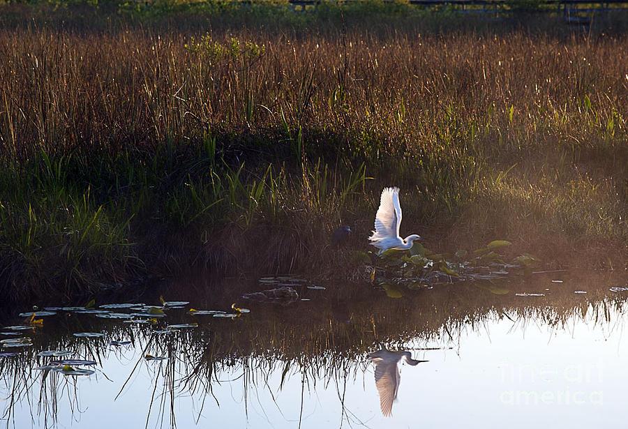 Sunrise Photograph - Anhinga Trail Sunrise by Bruce Bain