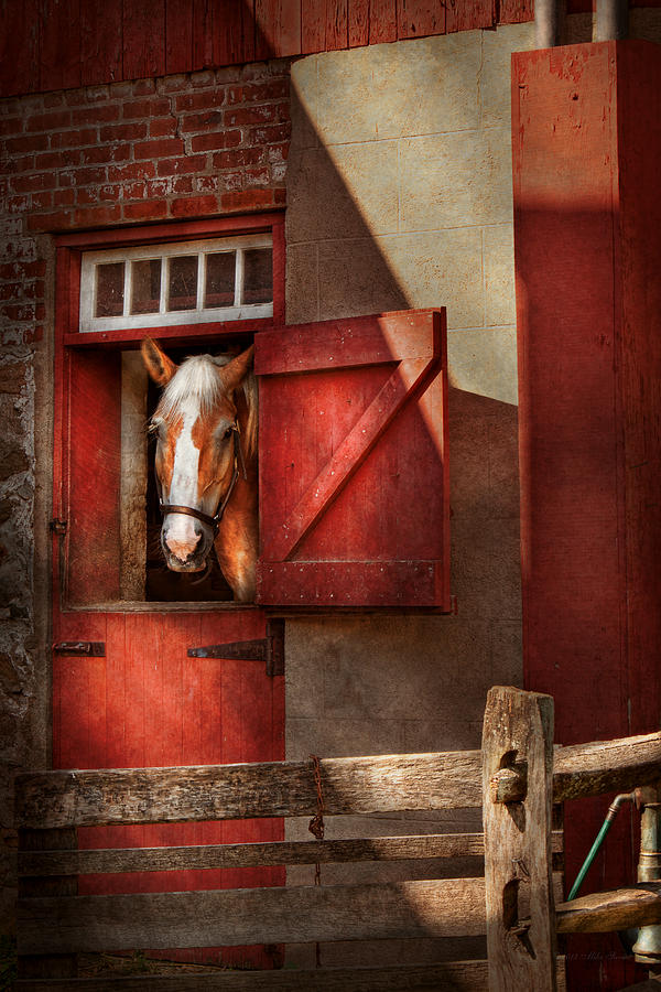 Animal - Horse - Calvins House  Photograph  - Animal - Horse - Calvins House  Fine Art Print