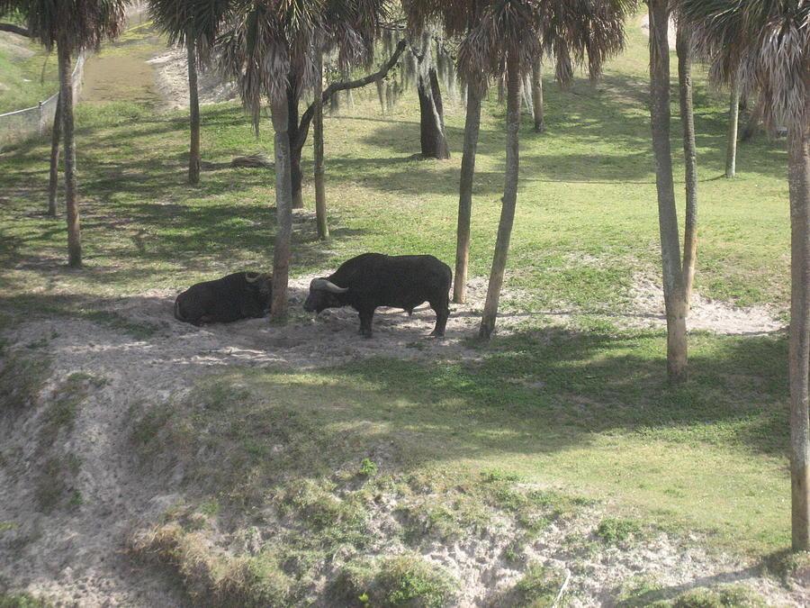 Animal Park - Busch Gardens Tampa - 01136 Photograph