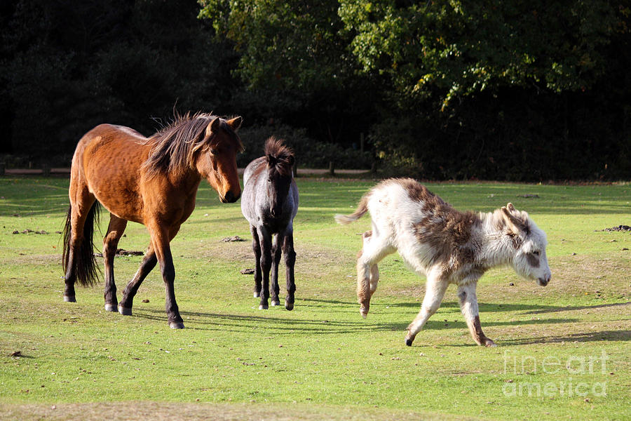 Animals Of The New Forest Photograph  - Animals Of The New Forest Fine Art Print