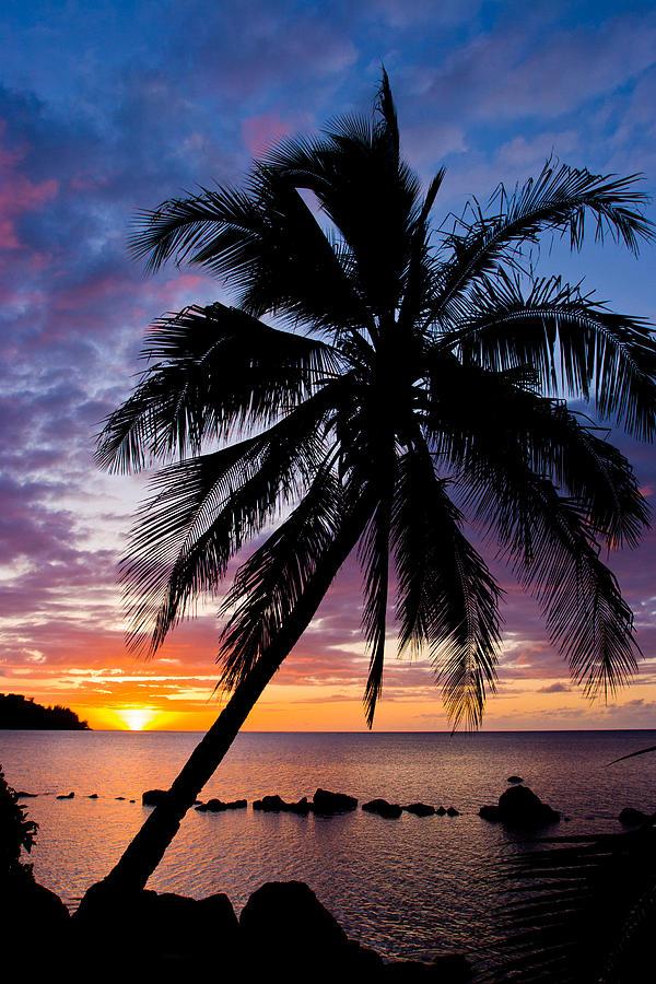 Hawaii Photograph - Anini Palm by Adam Pender