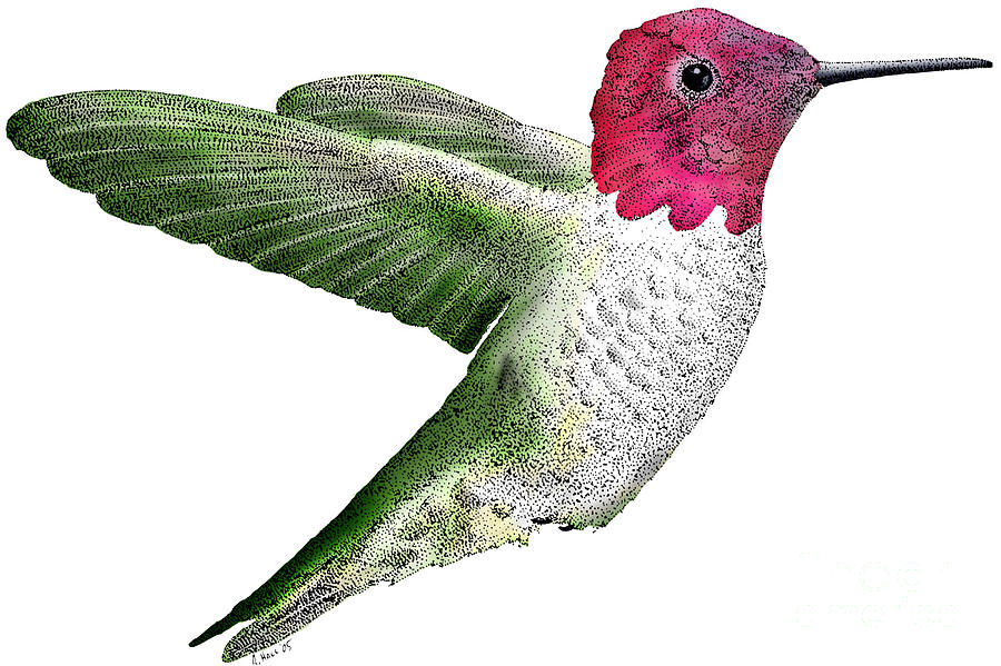 Fauna Photograph - Annas Hummingbird by Roger Hall