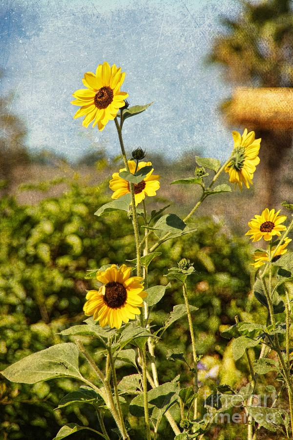 Another Sunny Day In Socal Photograph  - Another Sunny Day In Socal Fine Art Print