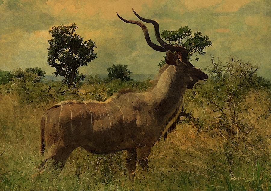 Antelope Photograph