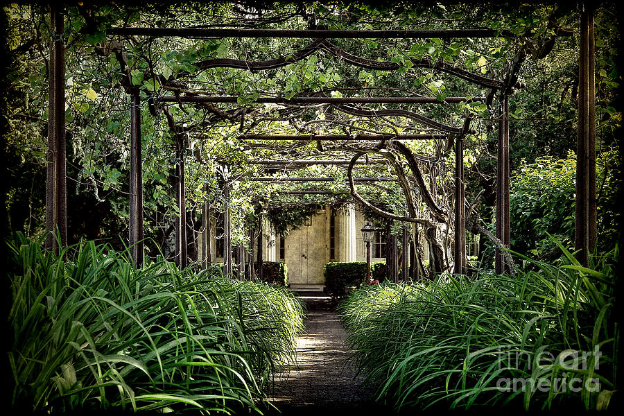 Antique Pergola Arbor Photograph  - Antique Pergola Arbor Fine Art Print