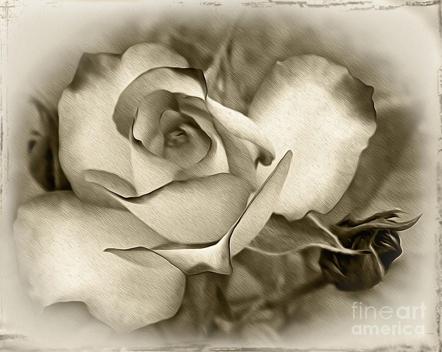 Antique Rose Photograph By Kaye Menner
