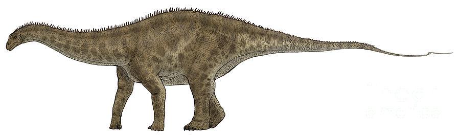 Apatosaurus, A Sauropod Dinosaur Digital Art